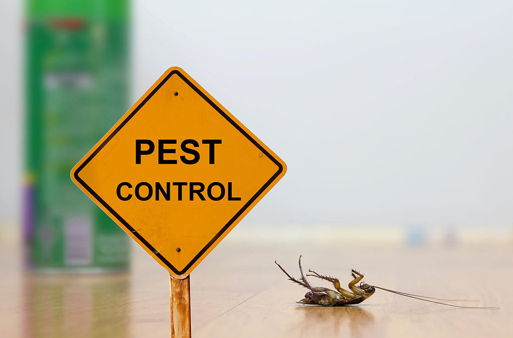 All about residential pest control in San Antonio