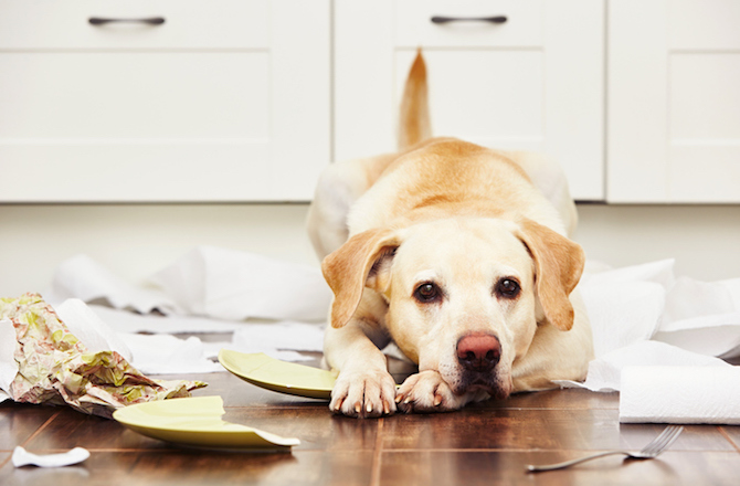 Five Signs Your Dog Is Not Getting Enough Attention