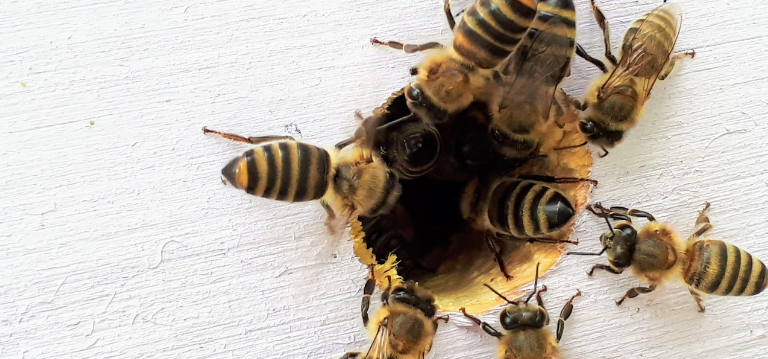 Do You Suspect a Wasp Infestation – Find Out What Could Be Causing It